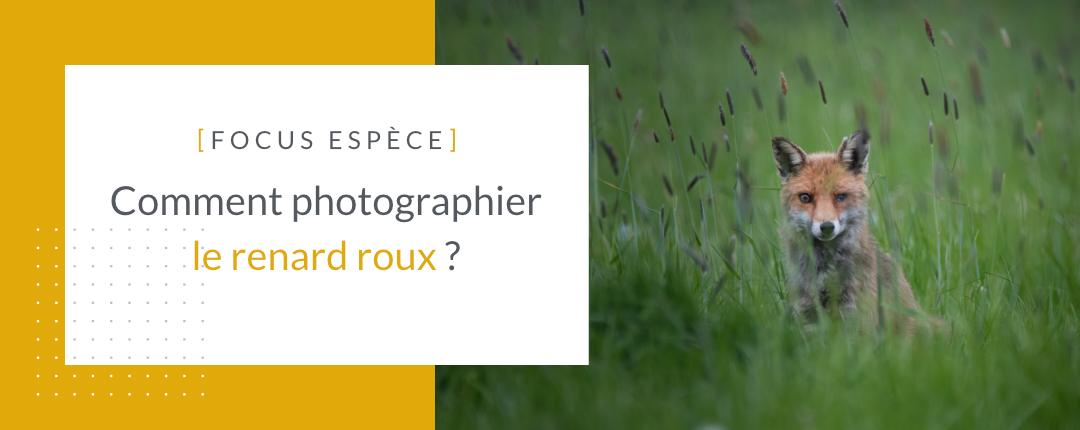 Photographier le renard