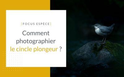Photographier le cincle plongeur
